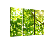 3-Piece Wall Picture Green Leaves Life Tree Picture on Canvas and Stretcher Frame Ready to Hang – Our Pictures on canvas Feature [Ready to Detailed Print up to 100 Megapixels.