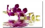 Picture on Canvas 80 x 60 CM Orchid Item No. A00792 Pre-Stretched on Real Wood Frame Art print as A wall picture with Frame-Better value than AN oil Painting, Painting Poster with more than 1 MADE IN GERMANY