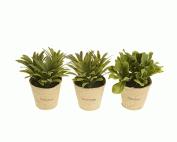 Kaemingk Plant In Paper Pot 14 x 8 x 8