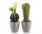 Kaemingk Cactus In Plastic Pot Green 11 x 32