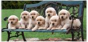 Safdie & Co. Beach Towel 28 X 58 Puppies on A Bench, Multi Colour, 80cm x 150cm