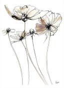 Steve Simpson Design Scribble Flower 1-Unframed Portrait Print Only (78 x 57cm), Fine Art Paper, White, Creams/Lilac, 78 x 0.5 x 57 cm