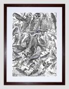 SCIENTIFIC ILLUSTRATION BIRDS OWLS BLACK WHITE BLACK FRAMED ART PRINT B12X7756