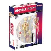 Tedco Toys 26059 4D Human Anatomy Skeleton Model