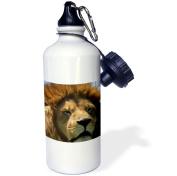 3dRose Male Lion, Sports Water Bottle, 620ml