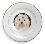 Maltese Dog Gold Rim Plate in Gift Box Christmas Present