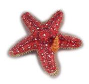 Sea Creations Starfish Jewellery Box 8.9cm