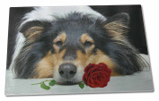 A Rough Collie Dog with Red Rose Extra Large Toughened Glass Cutting, Chopping B