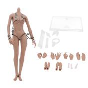 Sharplace 1/6th Scale Female Seamless Figure Black Skin Body Fit 30cm Hot Toys Kumik CG