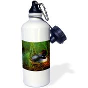 3dRose Minnesota, Common Loon bird, Leech Lake - US24 PHA0015 - Peter Hawkins, Sports Water Bottle, 620ml