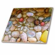 3dRose ct_155651_1 Seashells Photography-Colourful Sea Shells Pattern-Sea Ocean Seaside Nautical Beach Feel Decor-Ceramic Tile, 10cm