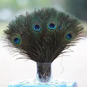 RICISUNG Natural Peacock Feathers 25cm - 30cm