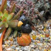 Midwest Design Imports, Inc Crow Standing on a Pumpkin for Miniature Garden, Fairy Garden