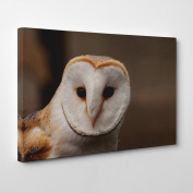 """Arty Pie """"Barn Owl 5.1cm Canvas Wall Picture Ready to Hang, Multi-Colour, 50cm x 36cm"""