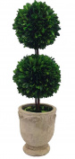 Preserved Boxwood Dble Ball Topiary W/ Footed Pot 50cm
