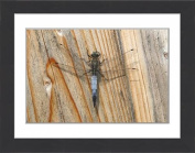 Framed Print of Black-tailed Skimmer -Orthetrum cancellatum-, male resting on a board
