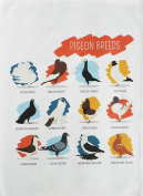 Breeds of Pigeon - Large Cotton Tea Towel by Half a Donkey