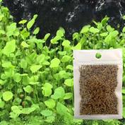 Patgoal Water Plant Seeds Glossostigma Hemianthus Callitrichoides Aquatic Water Grass Aquarium Decor Foreground