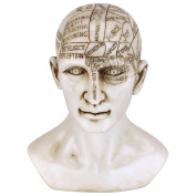 Design Toscano Statue Phrenology the Science of the Brain