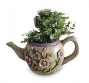 Planter Teapot Flowers
