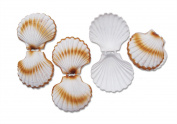 4 Small Shell Fake Dummy for Maritime Decoration Seafood, Shop Window, Stage Prop Party Table Decoration