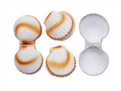 4 Large Shell Fake Dummy for Maritime Decoration Seafood, Shop Window, Stage Prop Party Table Decoration Gift Idea