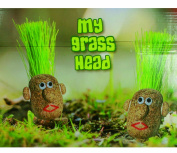 Girls Boys Girl Boy Children Child Kids - Low Cost Great value Novelty Grow Your Own Grass Head - Great Fun & Fast Results - Perfect for Stocking Fillers Christmas Xmas Birthday Easter Present Gift Fun Toys & Games or Pocket Money Treat or Reward Idea ..