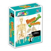 Science Kits - Human Bone Assembly