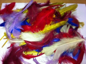 25g Exotic Assorted Feathers