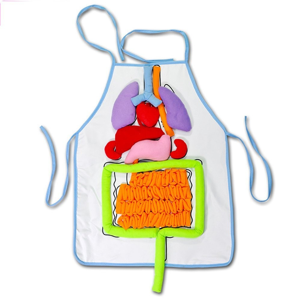 Anatomy Toy, Human Body Organs Awareness Educational Insights Toys ...