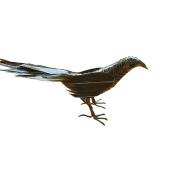 Birdie Gift Decoration Handicrafts Sparrow Giving Essential Artefact Folk Art Palm Fibre Weaving Magpie Simulation