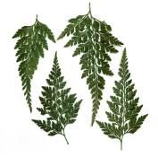 Pressed leaves, Asian Royal Fern 20pcs for floral art, craft, card making, scrapbooking