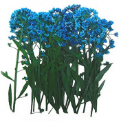 Pressed flowers, blue alyssum 20pcs for floral art, craft, card making, scrapbooking