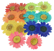 Pressed flowers, mixed daisy marguerite in red, pink, green, orange, turquoise, blue, yellow for art craft, card making, scrapbooking