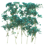 Pressed flowers, turquoise baby breath 20pcs, gypsophila for art craft card making scrapbooking